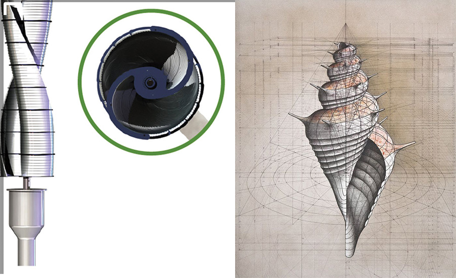 FIGURE 1. A fan and a nautilus seashell