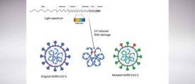 IAQ Vaccine